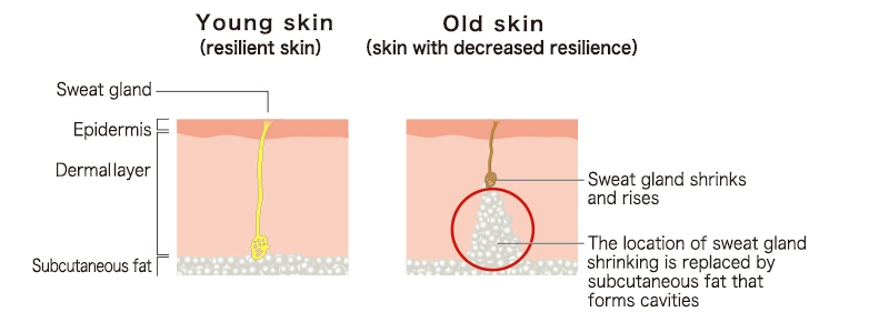 Young skin (resilient skin),Old skin (skin with decreased resilience)
