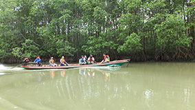 Observing a mangrove plantation in Thailand