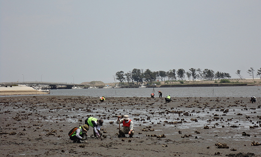 Earthwatch Institute Japan's Tideland Research