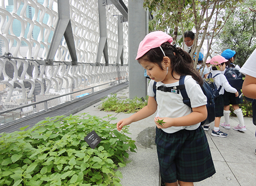 Environmental study in the roof garden at the Ginza Office