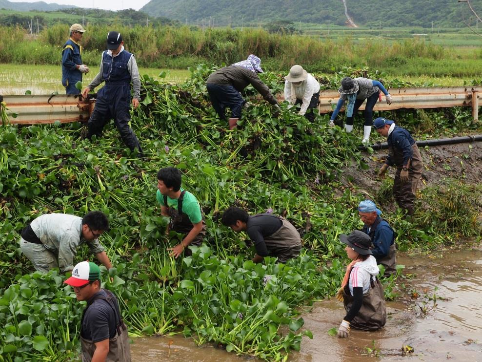 Removing work of 'Eichhornia crassipes' along Tabaru River