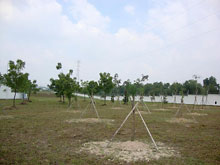 The trees planted within own premises